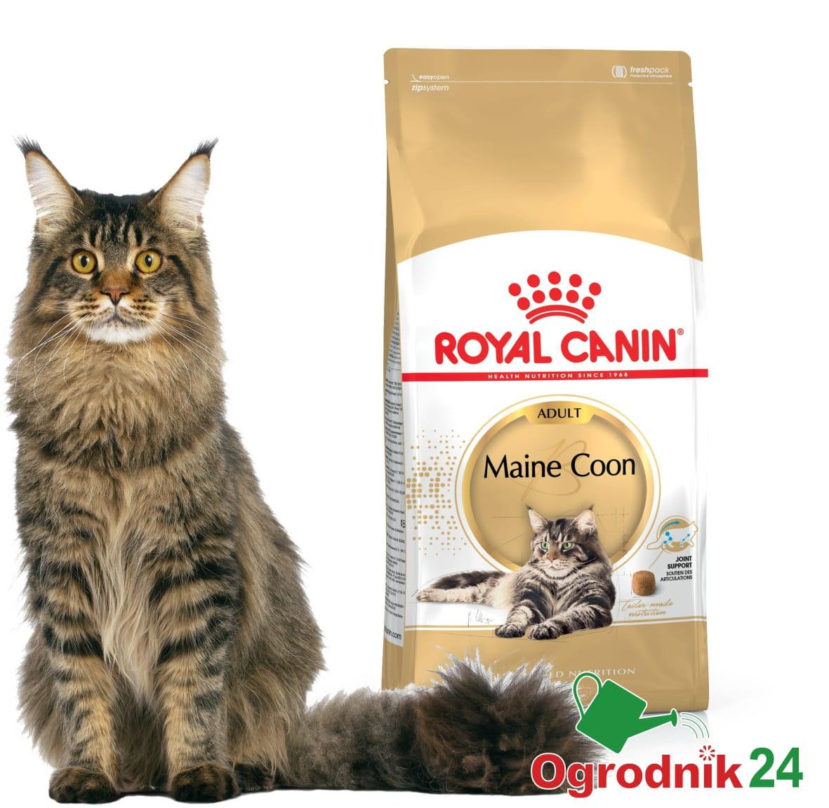 royal canin maine coon adult dla kota 10kg w wa. Black Bedroom Furniture Sets. Home Design Ideas